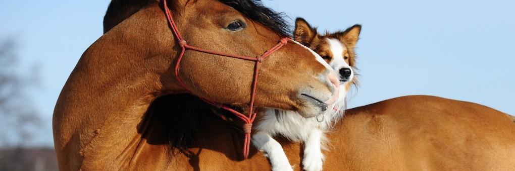 pferd luciano  fallbeispiele  julia dürr
